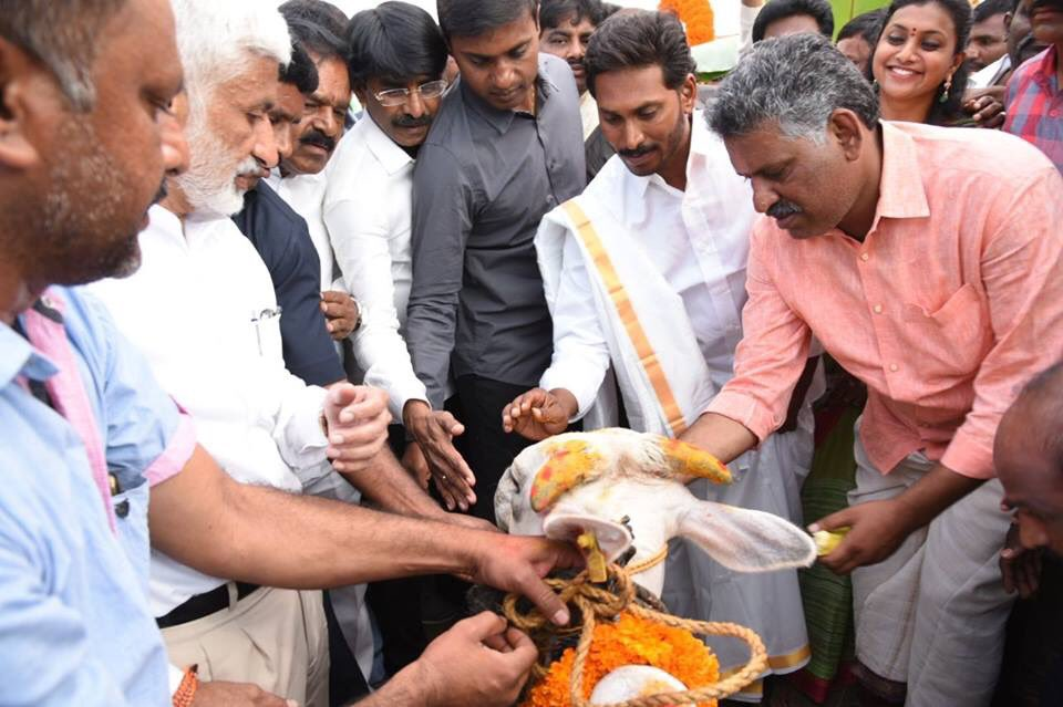 CM YS Jagan To Attend Sankranthi Celebrations At Gudivada