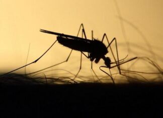 Dengue cases are high in GHMC