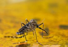 World Mosquitoes Day 2021